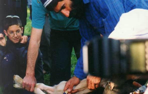 Is Animal Sacrifice a Modern Day Reality