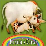 Vrindavan TP – Does He Really Care For Cows