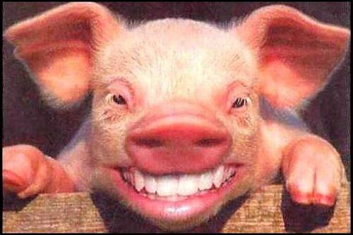 Hog Stool Like GBC Resolutions – 1987